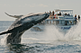 Whale Watching & Gold Coast Canal Cruise